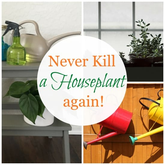 Simple Tips for Happy House Plants