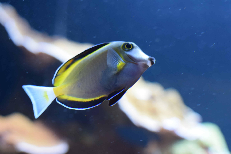 Fish aquarium utah - Fish At Loveland Living Planet Aquarium Utah