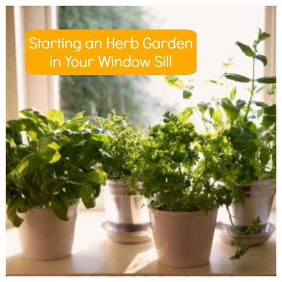 How To Start Growing An Herb Garden In Your Window Sill