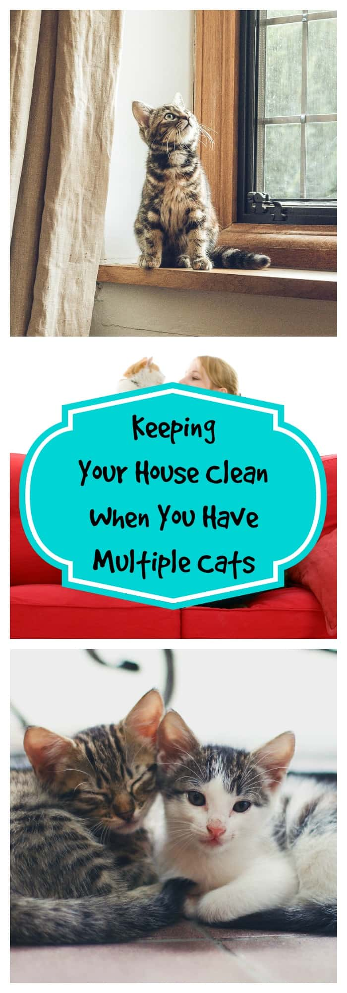 Pets-Keeping Your House Clean When You Have Multiple Cats