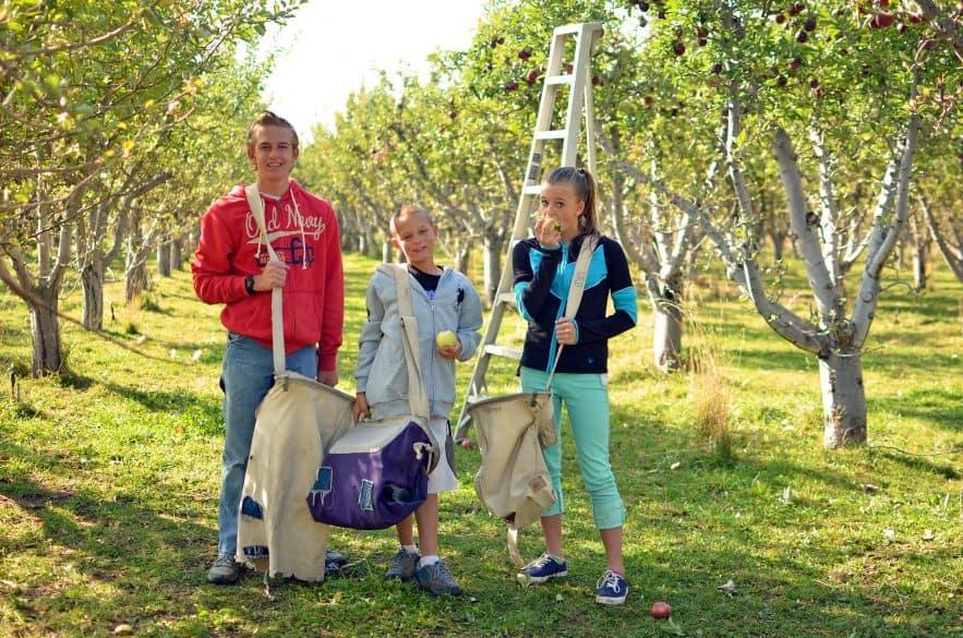 apple-picking-day