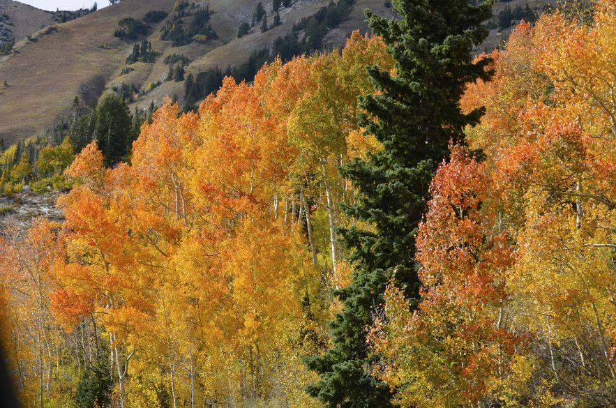 cecret-lake-fall-colors