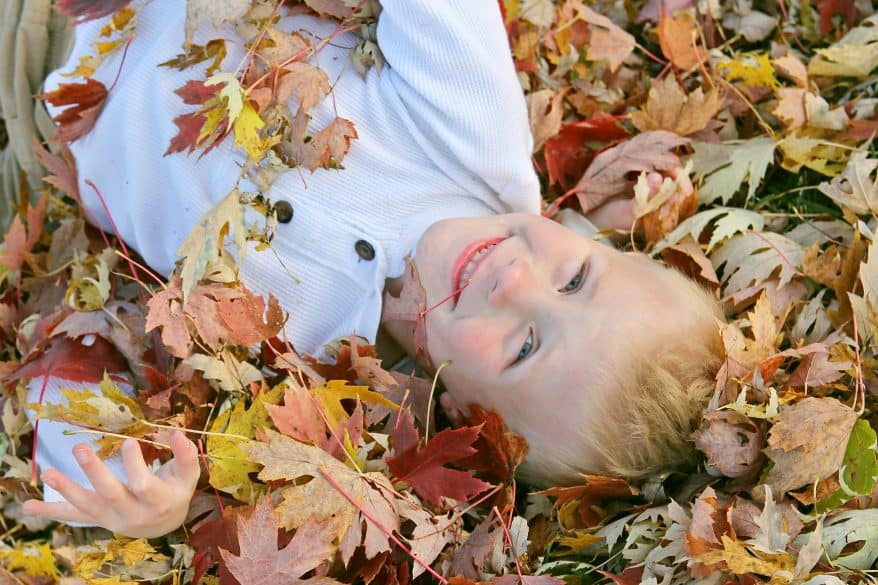 A cute, happy young child is laying in a pile of colorful fallen leaves that he has been jumping in on an Autumn day.