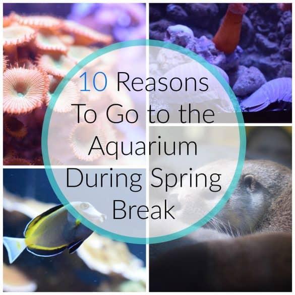 10 reasons to go to the Aquarium during spring break