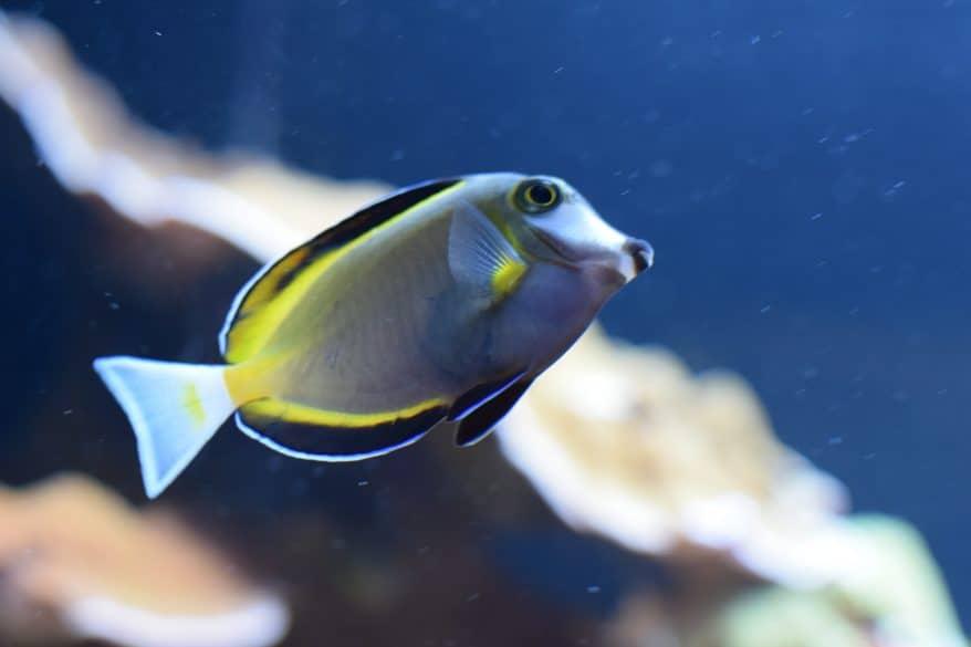 fish at Loveland Living Planet Aquarium Utah