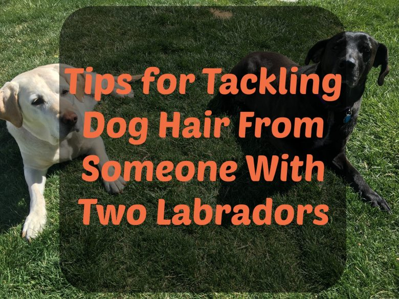 tackling dog hair