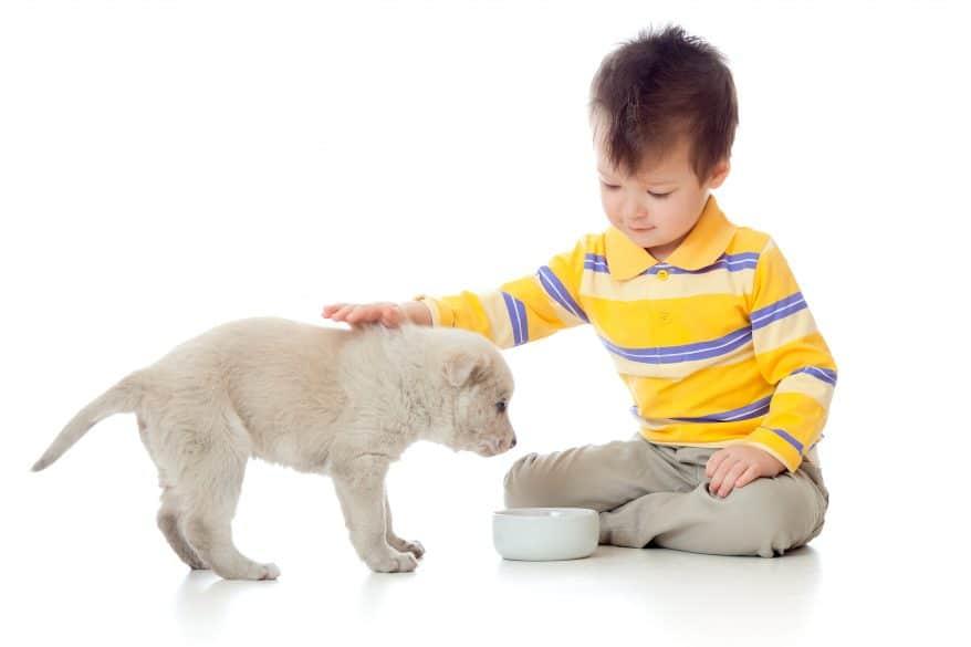 boy feeding puppy