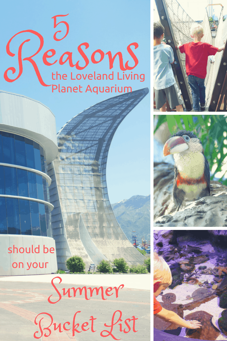 Family--5 Reasons the Loveland Living Planet Aquarium Should Be On Your Summer Bucket List--The Organized Mom