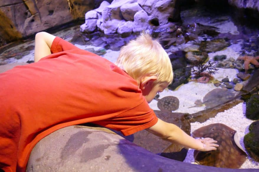 hands on aquarium