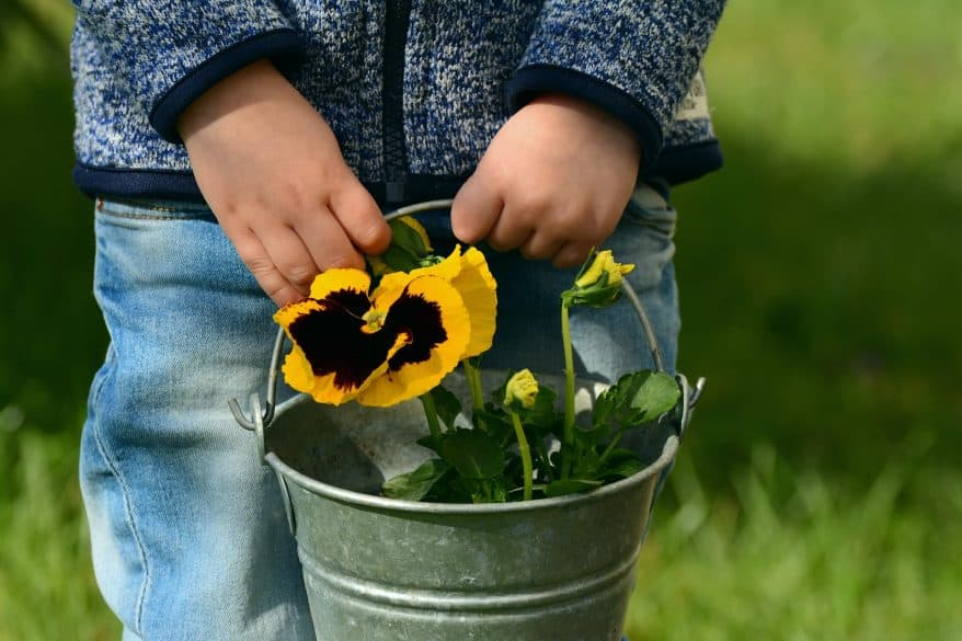 plant flowers with kids