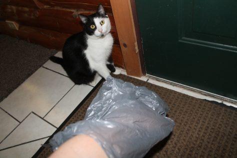 cat cleanup