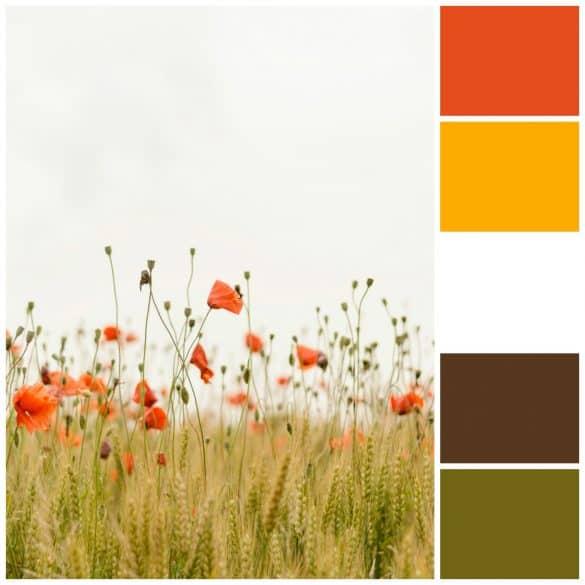 Dark Orange, Mustard, White, Brown, Olive