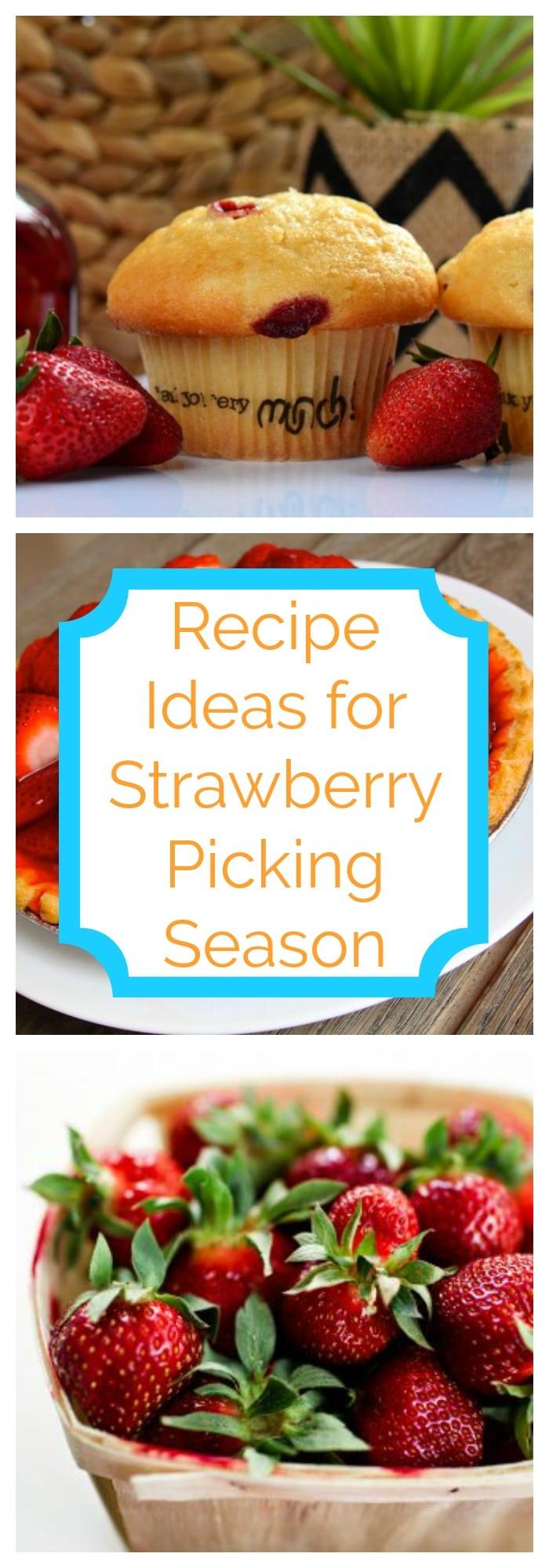 Recipe Ideas for Strawberry Picking Season
