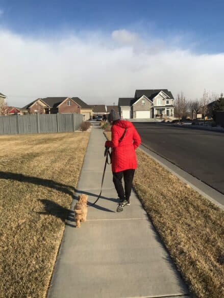 Pampering a puppy with a walk outside