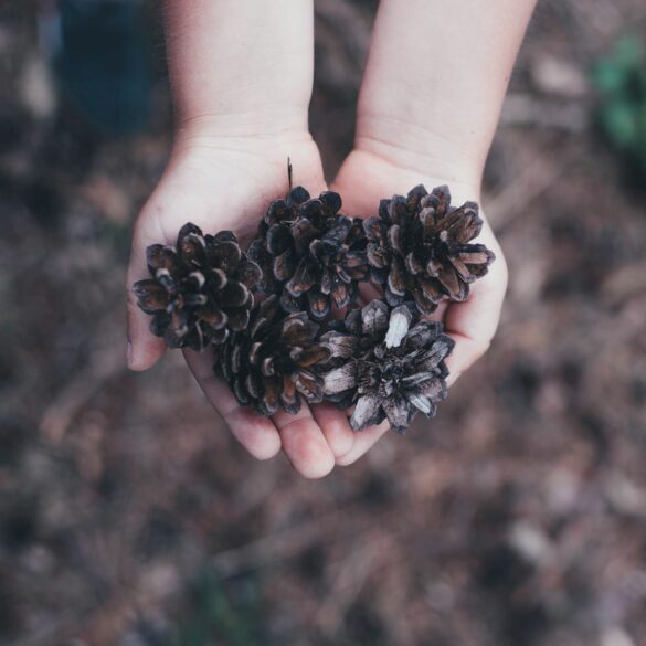 handful of pinecones; outside activities for toddlers